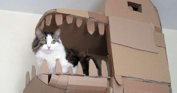 纸箱制作动物牙齿